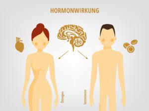 Hormonwirkung